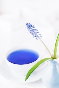 Muscari de flor de primavera e chá de ervas azul