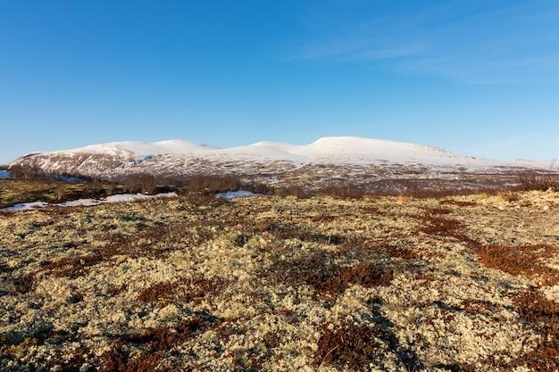 Musgo e líquene com as montanhas do inverno em dovre, noruega.