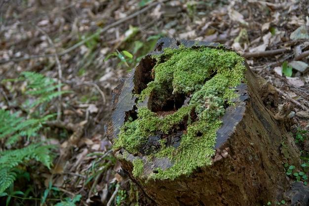 Musgo na madeira velha