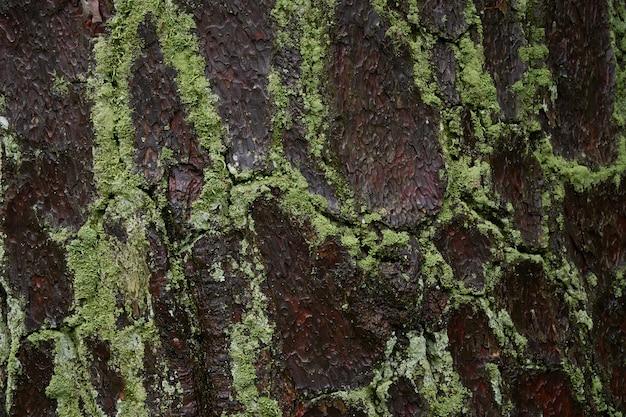 Musgo na superfície da madeira