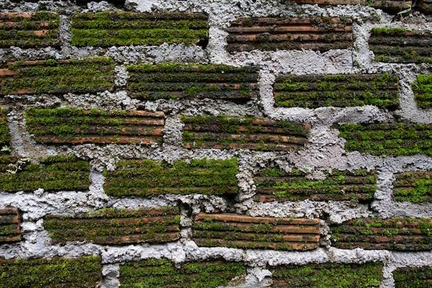 Musgo no tijolo sujo na parede para o fundo.