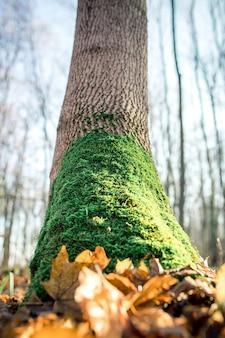 Musgo no tronco da árvore