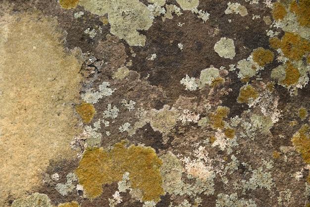 Musgo seco na pedra na natureza textura e fundo
