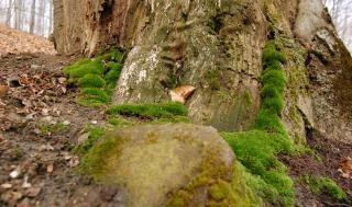 Musgo, verde, árvore