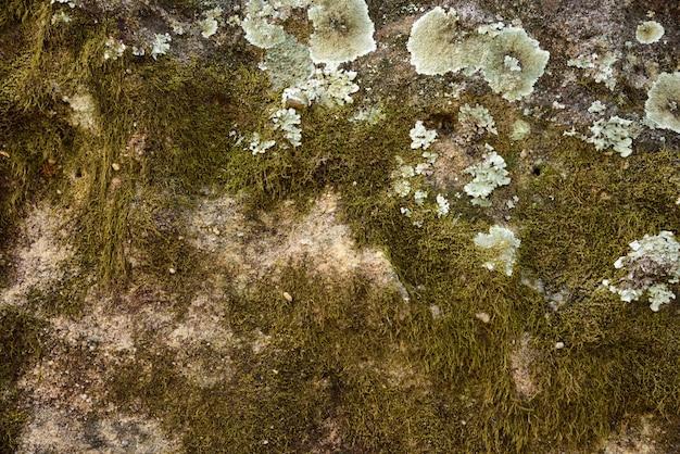 Musgo verde e mofo na textura e fundo