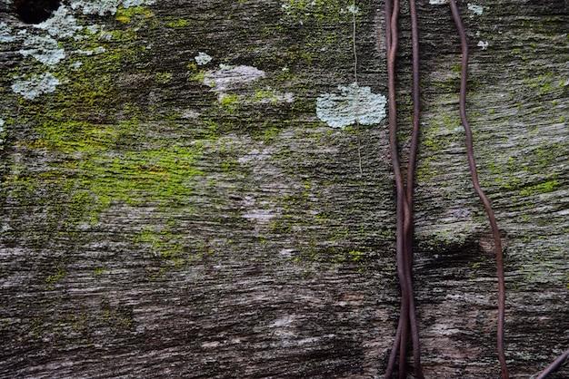 Musgo verde em madeira velha e textura de ferrugem de fio e fundo