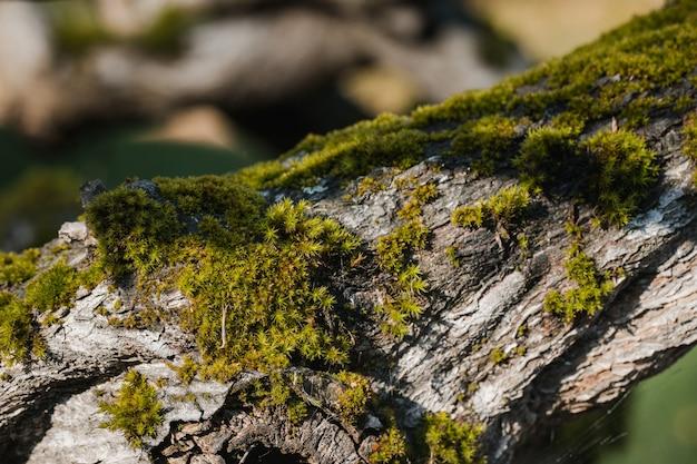 Musgo verde em rocha cinza
