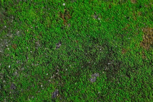 Musgo verde fresco cresce na rocha em um tema de fundo natural