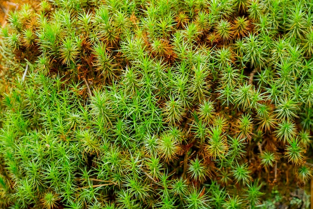 Musgo verde na floresta.