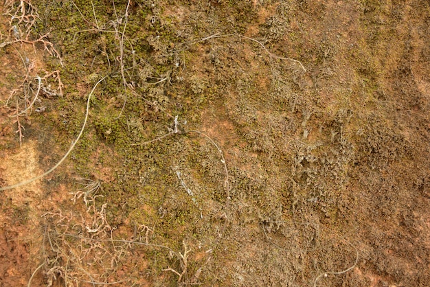 Musgo verde na textura de pedra e no fundo