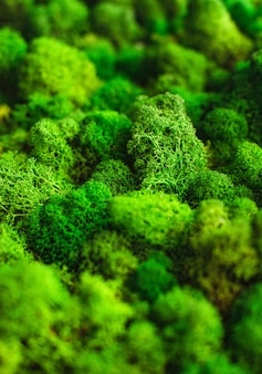 Musgo verde natural macro textura base em branco