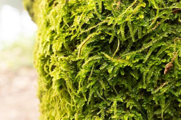 Musgo verde no fim da árvore acima da imagem.
