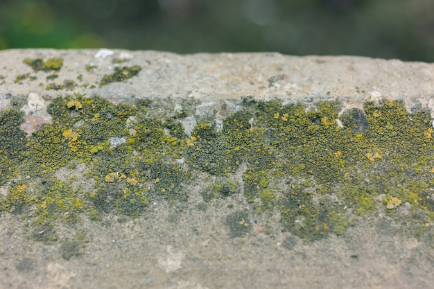 Musgo verde no fundo do cimento. detalhe musgo