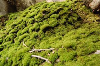 Musgo, verde