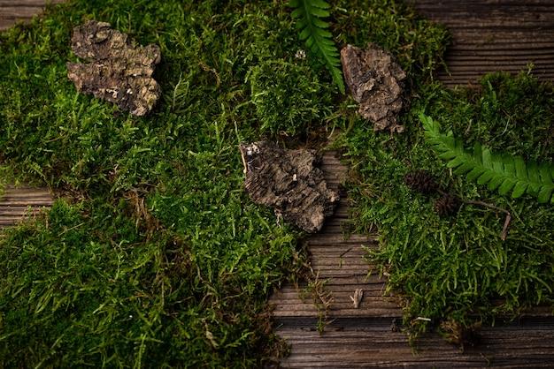 Musgos, folhas de carvalho e casca de árvore