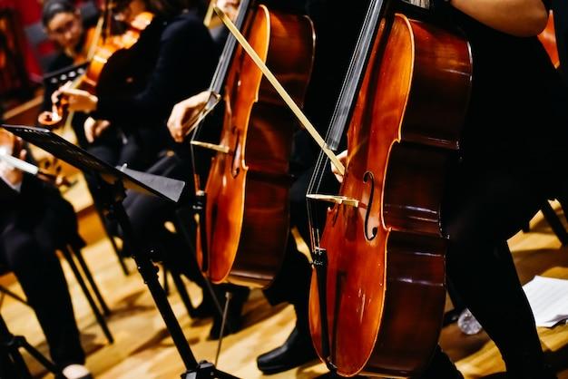 Músicos durante um concerto de música clássica, tocando violinos.