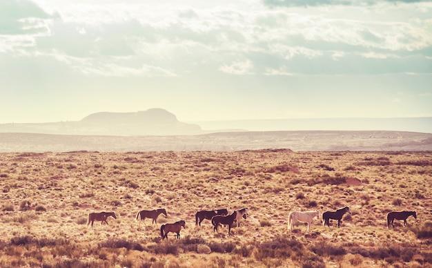 Mustangs selvagens na pradaria americana, utah, eua