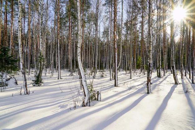 Na floresta de inverno com árvores cobertas de neve em um dia ensolarado