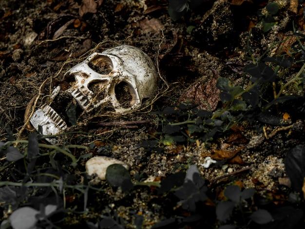 Na frente do crânio humano enterrado no solo com as raízes da árvore ao lado