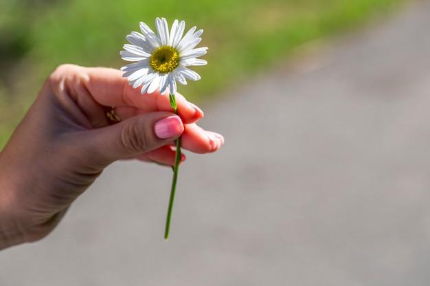 Na mão da menina uma margarida, dia ensolarado de verão