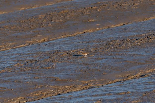 Na praia ao entardecer há pássaros procurando comida