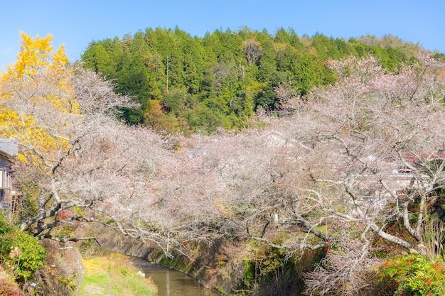 Nagoya, obara sakura no outono