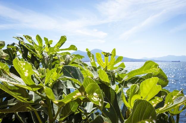 Nápoles, campânia, itália. vista da baía, do mar e do vulcão do monte vesúvio