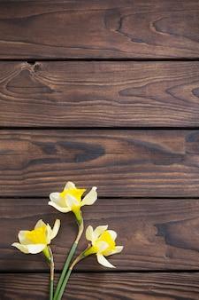 Narciso amarelo em madeira escura