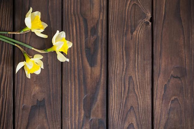 Narciso amarelo sobre fundo escuro de madeira