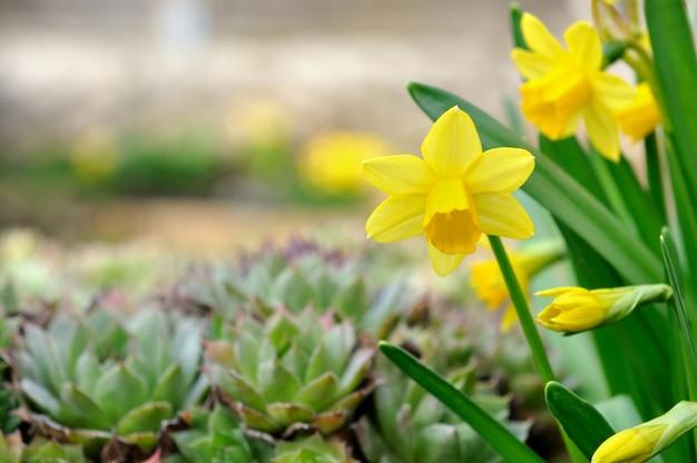 Narciso no jardim