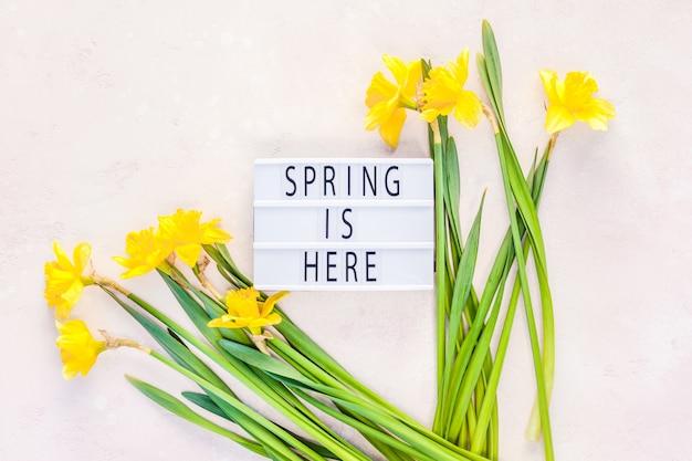 Narcisos amarelos primavera flores