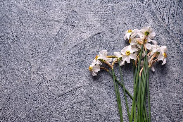 Narcisos brancos sobre fundo de concreto.