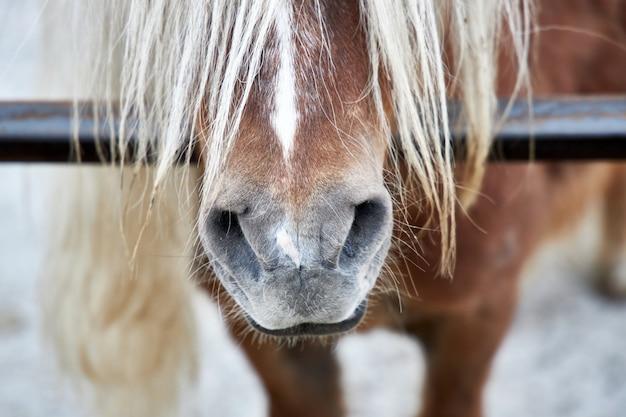 Narinas de um belo cavalo e crina, close-up