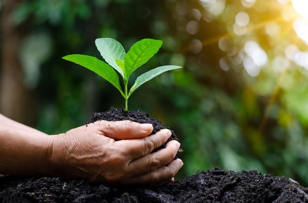 Nas mãos de árvores que crescem mudas. fundo verde de bokeh