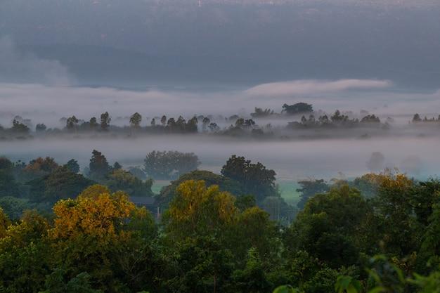 Nascer do sol com a névoa bela paisagem para relaxar na tailândia