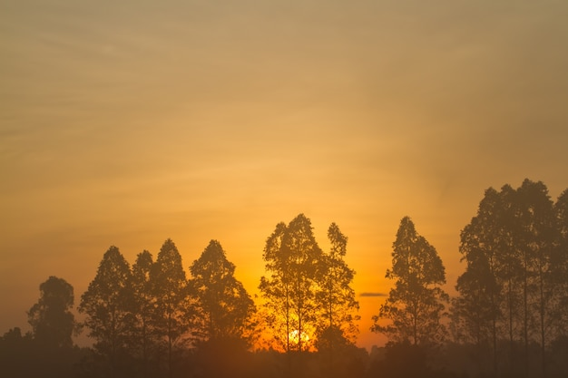 Nascer do sol com linda. árvore de silhueta