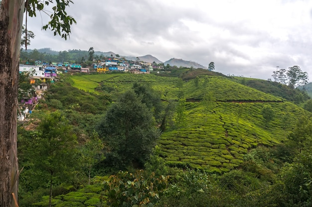 Nascer do sol de manhã cedo com nevoeiro na plantação de chá. munnar, kerala, índia. fundo da natureza