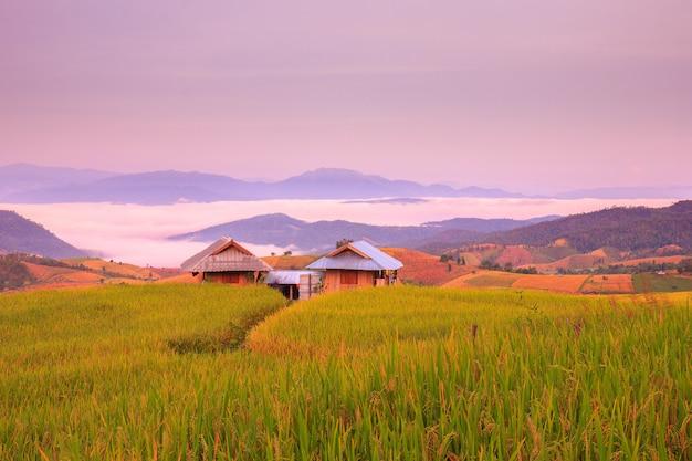 Nascer do sol em terraços de arrozal em mae-jam village, província de chiang mai, tailândia