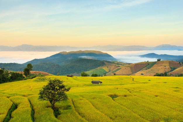 Nascer do sol em terraços de arrozal em mae-jam village