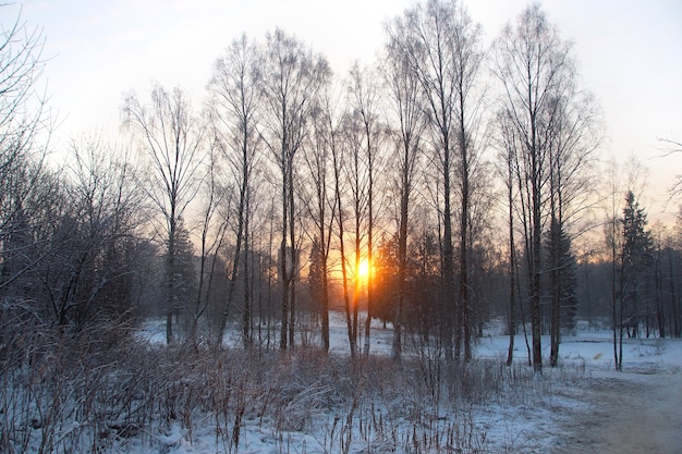 Nascer do sol em um parque de inverno, raias abrem caminho por entre as árvores, geada