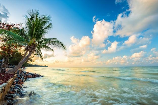 Nascer do sol lindo de manhã cedo sobre a árvore de coco