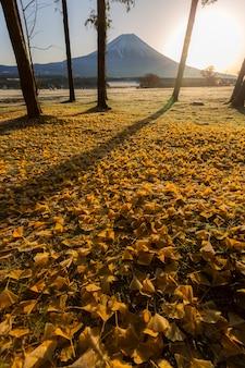 Nascer do sol monte fuji