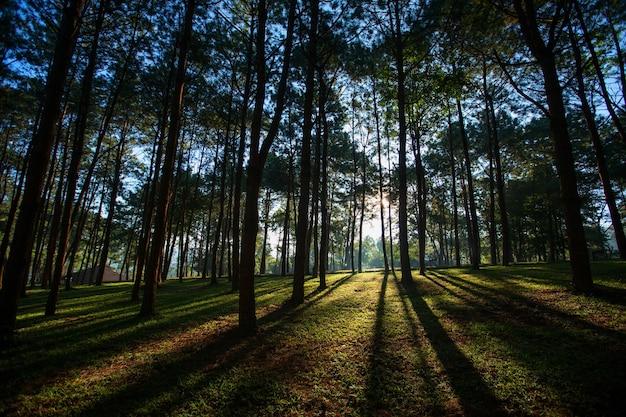 Nascer do sol na floresta
