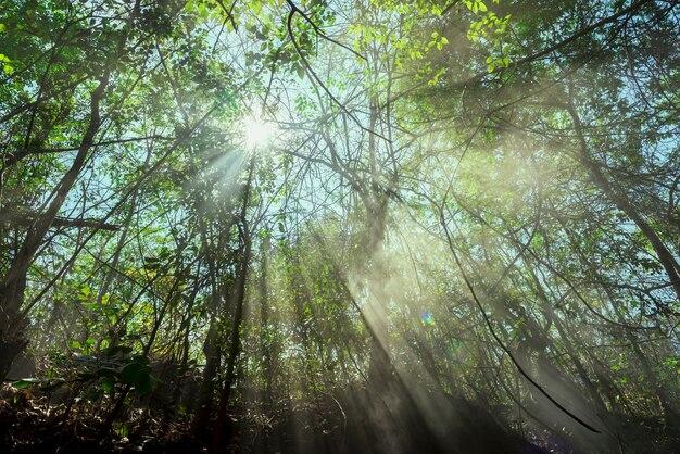 Nascer do sol nas árvores e uma luz brilhante no fundo da natureza.