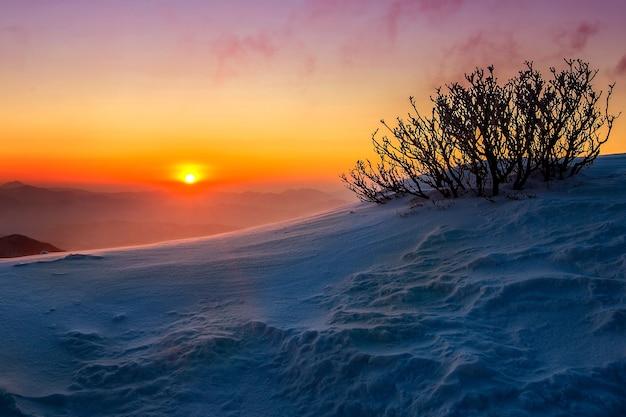 Nascer do sol nas montanhas deogyusan cobertas de neve no inverno, coreia do sul