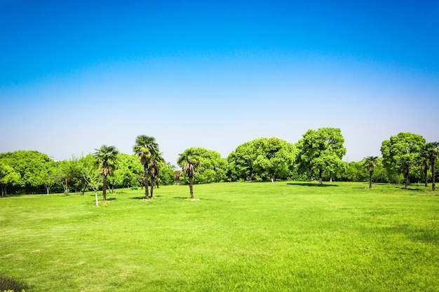 Nascer do sol no belo parque