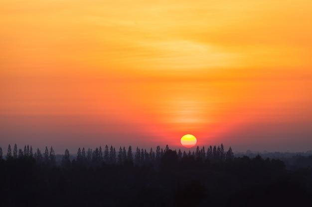 Nascer do sol no campo com o pinheiro da silhueta na floresta.