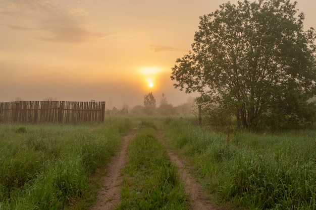 Nascer do sol no início da manhã acima do belo prado verde