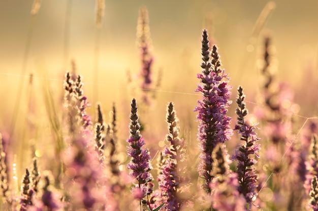 Nascer do sol sobre a campina em um clima nebuloso de verão