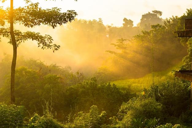 Nascer do sol sobre a selva